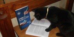 Black cat reading book about twitter